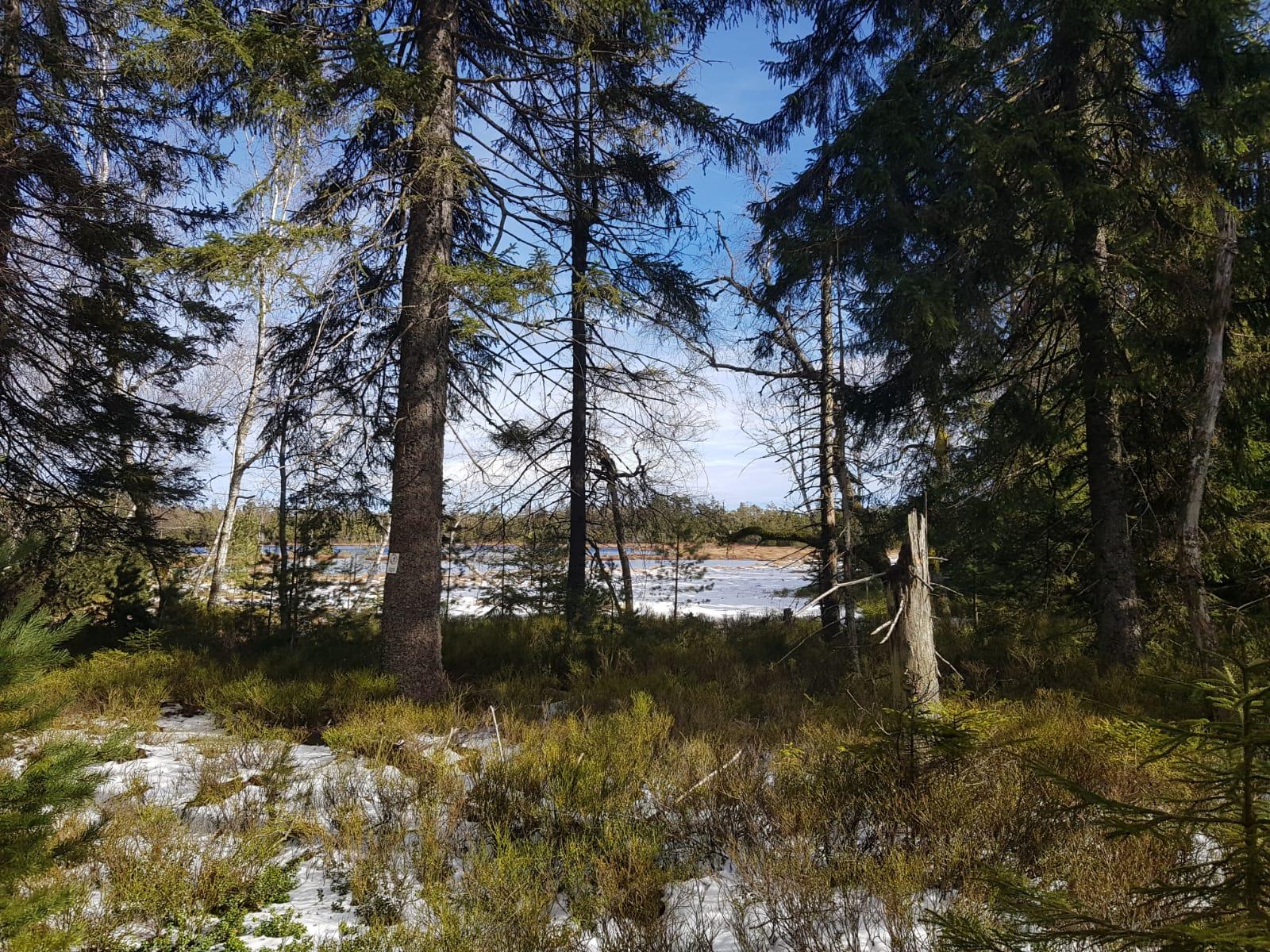 Hochmoor Bad Wildbad