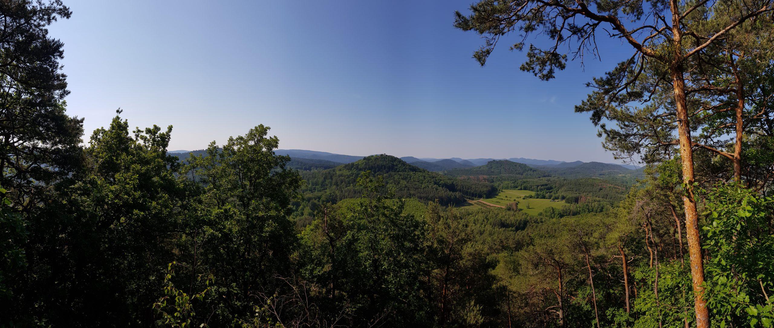 Ausblick in den Pfälzer Wald