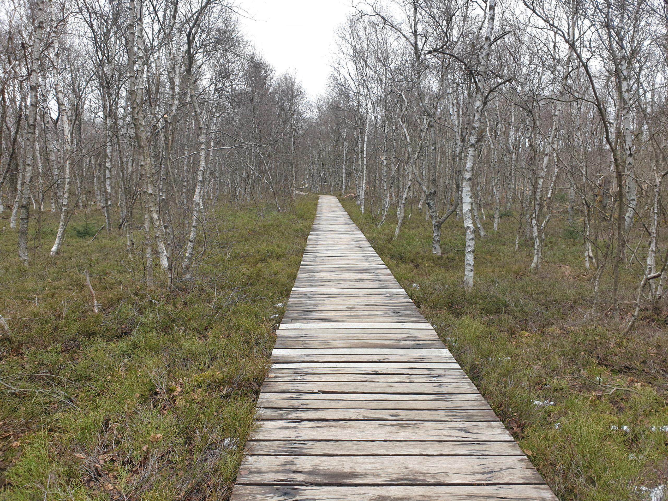 Plankenweg im Roten Moor Rhön
